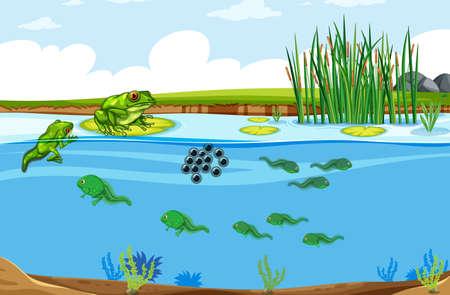 Green frog life cycle scene illustration