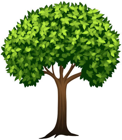 Leafy green tree white background illustration Illusztráció