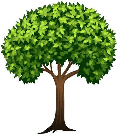 Leafy green tree white background illustration Illustration