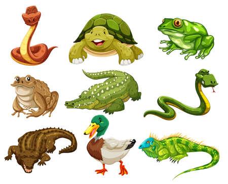 Set of isolated animals illustration