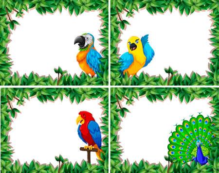 Set of bird frame illustration