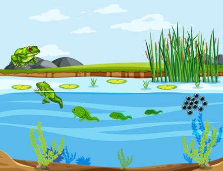 A frog life cycle illustration Иллюстрация