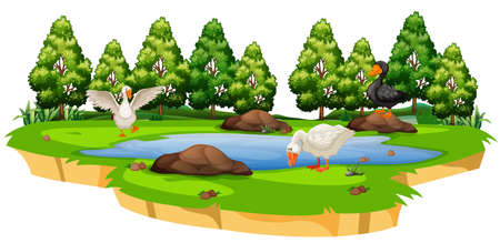 Isolated duck at pond illustration