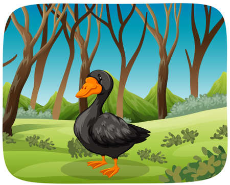 A black swan in nature background illustration Reklamní fotografie - 124593282