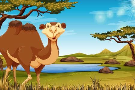 A camel in savana illustration