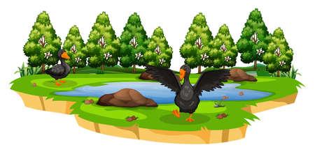Ducks in pond nature scene illustration Illustration