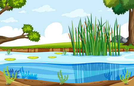 A nature swamp landscape illustration Stock Vector - 124506655