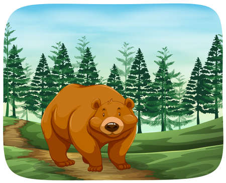 Bear in the wild illustration