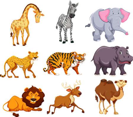 Satz wilder Tierillustrationen Vektorgrafik