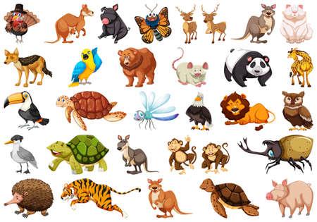 Set of wild animal illustration Illustration