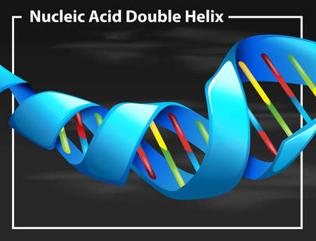 Nucleic acid double helix illustration