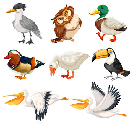 Set di illustrazioni di personaggi di uccelli Vettoriali