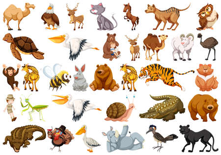 Set of wild animal illustration Illustration