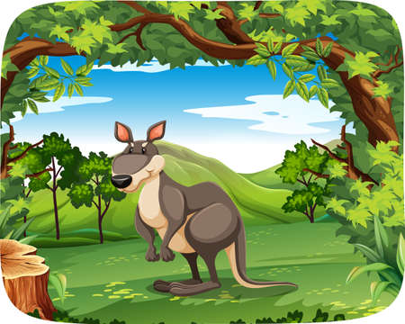 Kangaroo in the forest illustration
