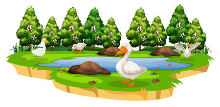 Odosobniona ilustracja stawu z kaczkami
