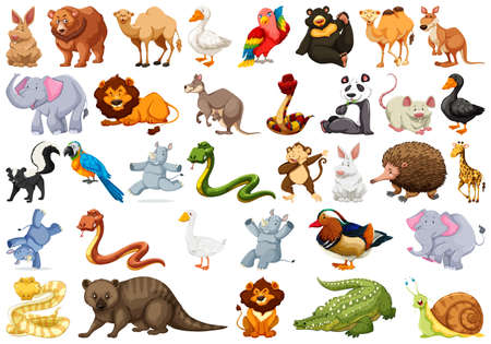Set of wild animal illustration Ilustrace