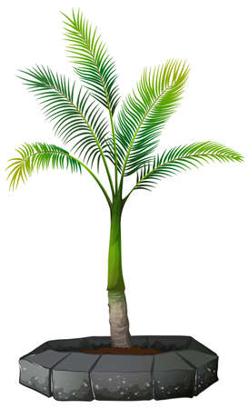 A palm tree on white background illustration
