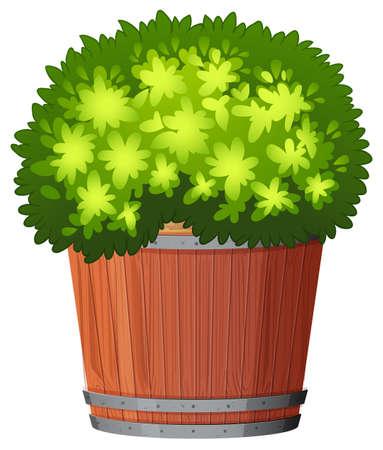 A plant in the pot illustration Illustration