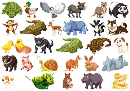 Set of animal character Illustration