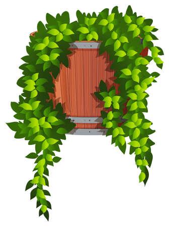 Vine in the plant pot