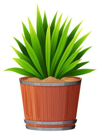 A green plant in pot Иллюстрация