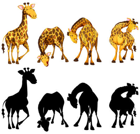 Silhouette, color and outline version of four giraffes illustration 向量圖像