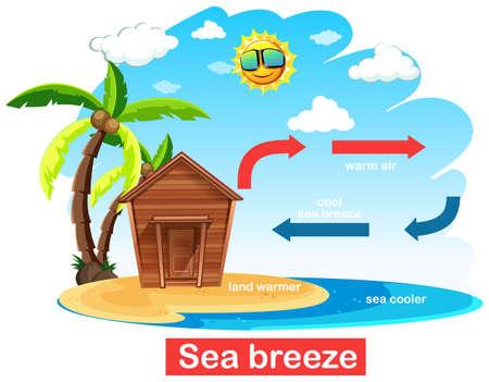 Diagram showing circulation of sea breeze illustration