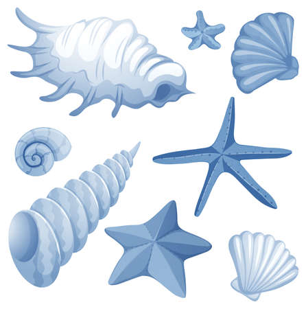 Different types of seashells in blue color illustration