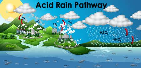 Diagram showing acid rain pathway illustration Illustration