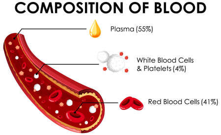 Diagram showing composition of blood illustration