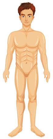 Human male naked on white background illustration