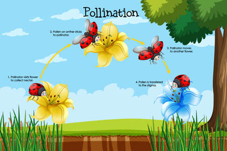 Diagram showing pollination with flower and bug illustration