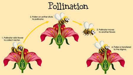 Diagram showing pollination with bee and flowers illustration 스톡 콘텐츠 - 134514301