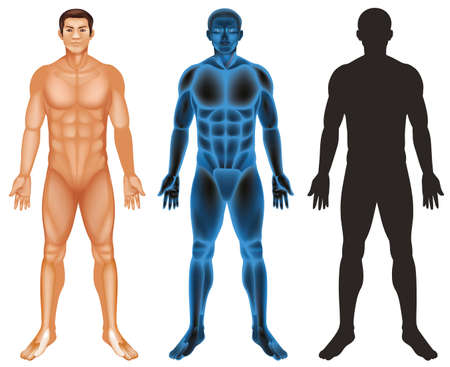 Human body on white background illustration
