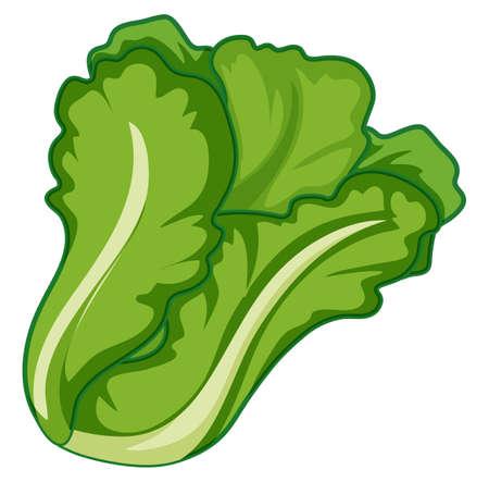 Lechuga verde sobre fondo blanco ilustración