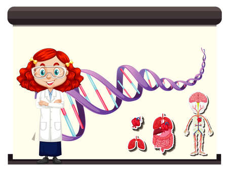 Scientist with DNA diagram and human anatomy on board illustration