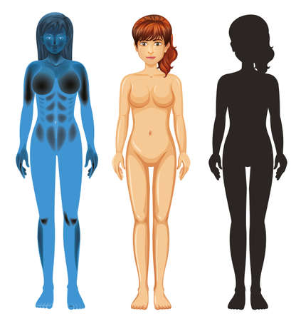 Female human anatomy on white background illustration