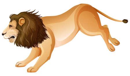 Wild lion jumping on white background illustration Ilustrace