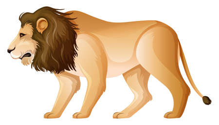 Wild lion standing on white background illustration