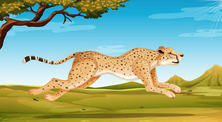 Wild cheetah running in the field at day time illustration