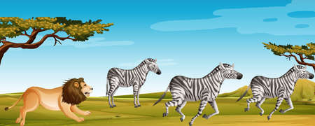 Scene with lion hunting zebra in the green field illustration Ilustrace