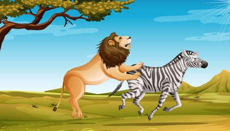 Wild lion hunting zebra in the savannah field illustration