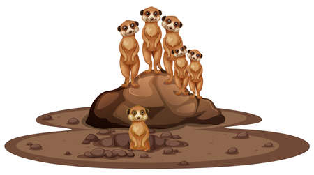 Group of meerkats smiling on the rock illustration