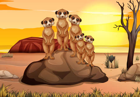 Scene with many meerkats standing on the rock illustration Illustration