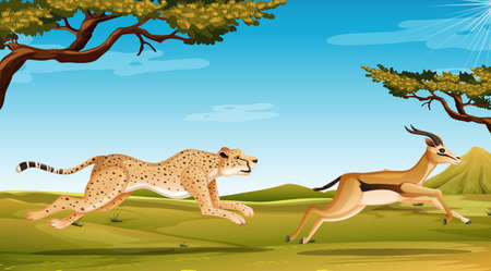 Scene with cheetah chasing anelope in the savannah field illustration