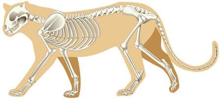 Outline drawing of leopard with skeletons illustration Vektorgrafik