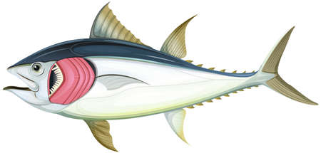 Fish with gills on white background illustration