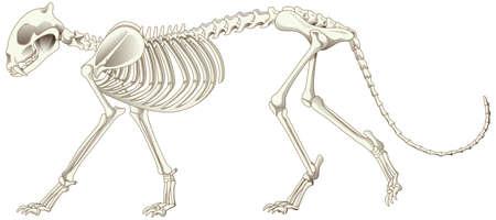 Leopard skeleton on white background illustration