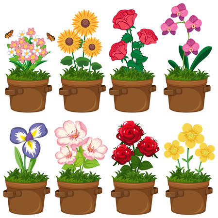 Beautiful flowers in the garden on white background illustration