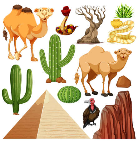 Set of cute desert animal and nature illustration